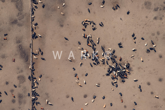 Feedlot, Greeley, Colorado.  Aug 2014.  812909