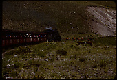D&amp;RGW #484 K-36 with excursion train near Osier. Cows on track.<br /> D&amp;RGW  Osier, CO