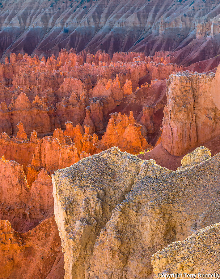 Bryce National Park, Utah: Evening sun reflecting among the fins and hoodoos of the Silent City