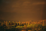 The combination of a setting sun and the atmospheric conditions of an approaching thuderstorm gives this scene of the Sonaran desert sepia tones, Arizona.
