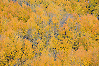 Fall colors near North Clear Creek Falls.<br /> <br /> Canon EOS 5D, 70-200 f/2.8L lens