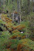 Moss covered boulders in a forest. Stuibenfall, Otztal, Tyrol,Tirol, Austria.