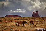 A photo of navajo horses on the reservation, Monument Valley.