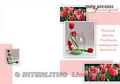 Alfredo, FLOWERS, photos, BRTOLP14554,#F# Blumen, flores