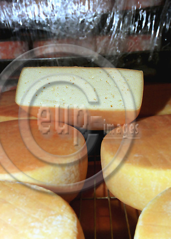 """SERANVILLERS - FRANCE - 01 MAY 1996 -- Cheese manufacturing on the SAUVAGE family estate in France. --  The """"Tome Cambray"""" cheese is soaked in a solution of salt and beer for three days a week during its two month ripening time. -- PHOTO: JUHA ROININEN / EUP-IMAGES"""