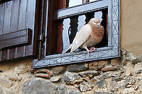 Stock photo: Brown pigeon sitting quietly on a charming old fahsioned wooden window of a stone house in Kakopetria village of Cyprus.