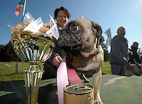 1. Sächsisches Mopsrennen auf der Windhunderennbahn in Eilenburg - Sylke Arnold mit Cosma (3), der schnellste Mops-Hündin. Foto: Norman Rembarz