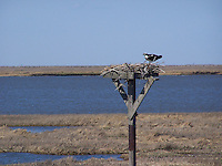 Forsythe National Wildlife Refuge, New Jersey