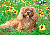 Marek, ANIMALS, REALISTISCHE TIERE, ANIMALES REALISTICOS, dogs, photos+++++,PLMP2972,#a#, EVERYDAY