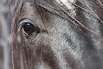 Eye of a horse closeup