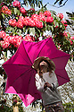 30/03/15<br /> <br /> With rain forecast for the Easter holiday, Freya Kirkpatrick (7), equips herself with an umbrella before exploring the rhododendrons, which are now blooming, ten days later than usual at Lea Gardens, near Matlock, Derbyshire.<br /> <br /> All Rights Reserved - F Stop Press.  www.fstoppress.com. Tel: +44 (0)1335 418629 +44(0)7765 242650