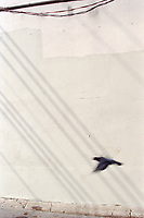 A bird flying against a wall, wires shadow behind