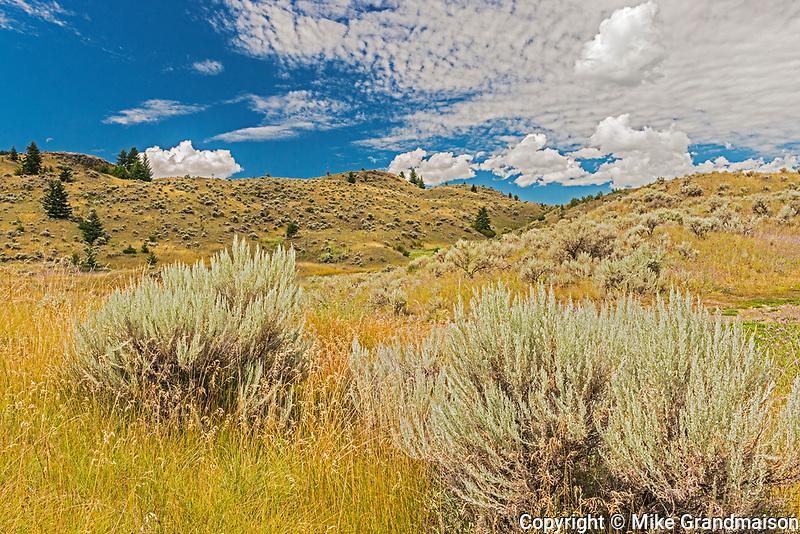 Sagebrush and Grasslands. Thompson Valley, Kamloops, British Columbia, Canada