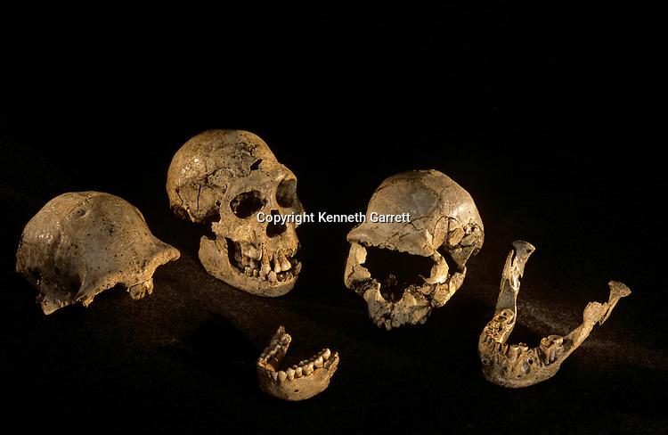 Skulls & mandibles from Dmanisi, Dmanisi, Georgia Homo Erectus site, 1.8 million year old hominins