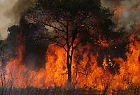 Forest burning