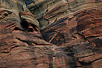 A red-tailed hawk flies through a canyon in Zion National Park, blending in with the striated cliffs.