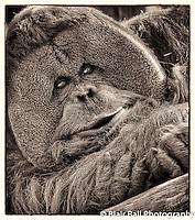 Memphis Zoo Photos taken at the Memphis Zoo.