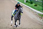 LOUISVILLE, KENTUCKY - MAY 01: Tacitus, trained by William Mott, exercises in preparation for the Kentucky Derby at Churchill Downs in Louisville, Kentucky on May 1, 2019. John Voorhees/Eclipse Sportswire/CSM