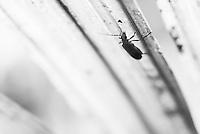 Insect in the Amazon Rainforest, Coca, Ecuador, South America