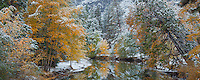 Yosemite National Park, CA: New snowfall on fall colors and calm reflections along the Merced River