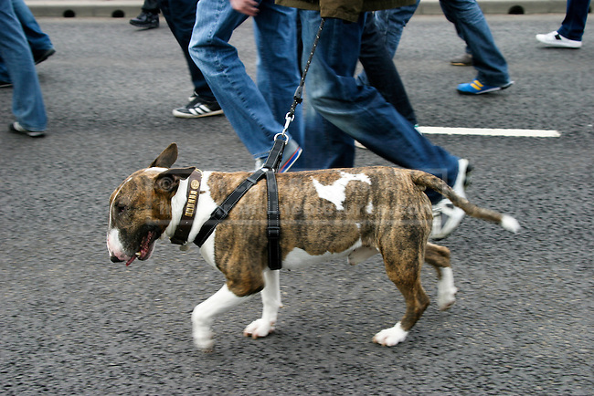 EDL protesters with dog make their way to the holding area.