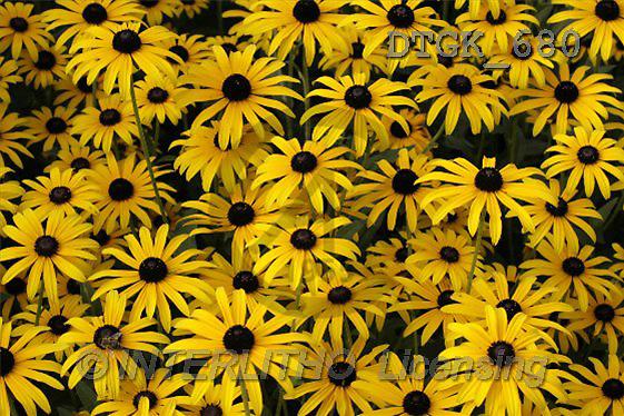 Gisela, FLOWERS, photos(DTGK680,#F#) Blumen, flores, retrato