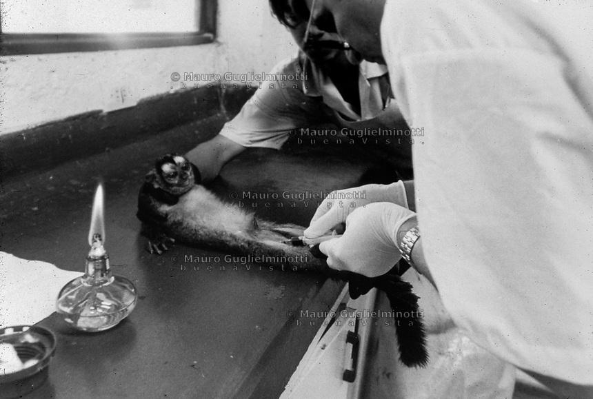 studi sulla malaria - Università di Cali e il villaggio di Buenaventura. Malaria iniettata su lemuri per sperimentazione