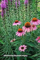 63821-03018 Marsh Blazing Star & Purple coneflower (Liatris spicata & Echinacea purpurea ovation)  Marion Co.,  IL