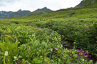 Heath tundra near Hatcher Pass, Alaska,  Independence Mine State Historical Park