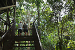 Tourists climbing up to Canopy Tower at Daintree Rainforest Discovery Centre.  Daintree National Park, Queensland, Australia