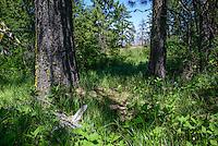 Buckhorn Overlook
