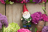 Sunday, 19 May 2013, London, UK. Planting and set-up work continues for the Chelsea Flower Show 2013 ahead of its opening next Tuesday. Pictured: Garden Gnome.
