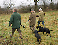 Three men, accompanied by two labrador dogs, stride out in the course of a day's winter rough shooting in Kent, England. Their intention is to roam the fields until the dogs sniff out pheasants or ducks from the hedgerows, woods and reeds and get them up into the air to be shot.