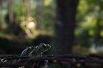 Amphibians, Reptiles and Fish