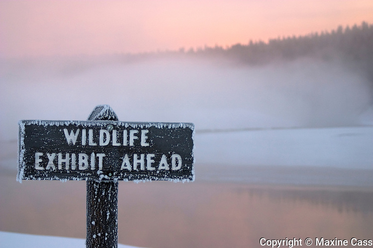 """""""Wildlife Exhibit Ahead"""" interpretive sign in pink early morning winter mist over the Yellowstone River, near Alum Creek,Yellowstone National Park, Wyoming, United States of America"""