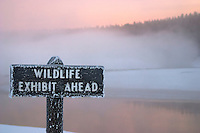 """Wildlife Exhibit Ahead"" interpretive sign in pink early morning winter mist over the Yellowstone River, near Alum Creek,Yellowstone National Park, Wyoming, United States of America"