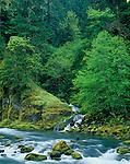 Umpqua National Forest, OR<br /> Fox Creek flows through spring forest into the North Umpqua River