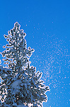 Snow covered tree at Lost trail Pass in Montana with ice crystals in the air
