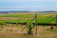 a view over the mother vines or even grand mother vines that are the source for new plants and grafts and in the background a view over the village Chouilly from the experimental vineyard of the CIVC at Plumecoq near Chouilly in the Cote des Blancs It is used for testing clones soil treatment vine treatments spraying, Champagne, Marne, Ardennes, France