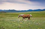 Horse on open range land in Montana