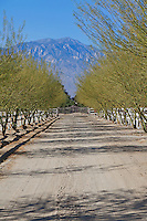 Gated dirt road lined with Palo Verde trees