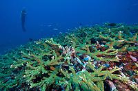 , Kaplaman reef, Kavieng, Pacific ocean, Papua New Guinea, Asia