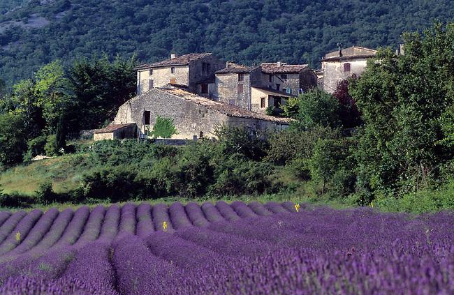 Vaucluse, France. Champ de lavande et village de Robion *** Lavender field near Robion village. France, Vaucluse.
