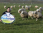 Foto: VidiPhoto<br /> <br /> LIENDEN – Schapenhouder Henk de Kat uit Lienden tussen zijn schapen. Samen met nog andere schapenhouders verkoopt hij het streekproduct Polderlam.