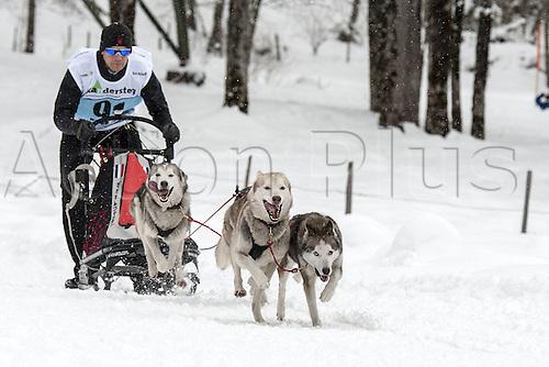 20.02.2016. Kandersteg, Bern, Switzerland. Swiss dog-sled championships.  Walter Nistelrooy (NED)
