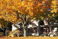 Peterborough, New Hampshire, NH, A fall display and colorful maple tree stand outside the Field Mouse Gift Shop in Peterborough in the autumn.