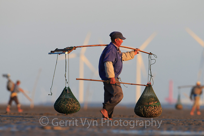 Shellfish harvesters on the mudflats at Rudong, China. Besides being important to human livelihoods these mudflats are the last remaining place in the Yellow Sea where the critically endangered Spoon-billed Sandpiper stops on migration. The mudflats are being quickly lost to development.