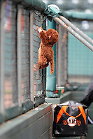 The Augusta Greenjackets have a stuffed mascot monkey named Norm. He was picked up by outfielder Dom Duggan as a good luck charm after the team lost 11 of 13 to begin the season. The team went on to win the next six of eight, and though they fell on another rough patch, the monkey stays, largely at Duggan's request. He's become a pseudo-celebrity, having been featured in the Augusta Chronicle and on local television station WJBF, our ABC affiliate, says Eric Little, the GreenJackets' media relations staffer. He is shown here just before the start of a game in Greenville, S.C., against the Drive.