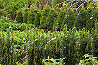 Shrub and tree nursery.