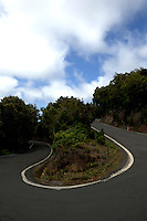 Forests of North Tenerife, Gran Canaria, Canary Islands, Spain.